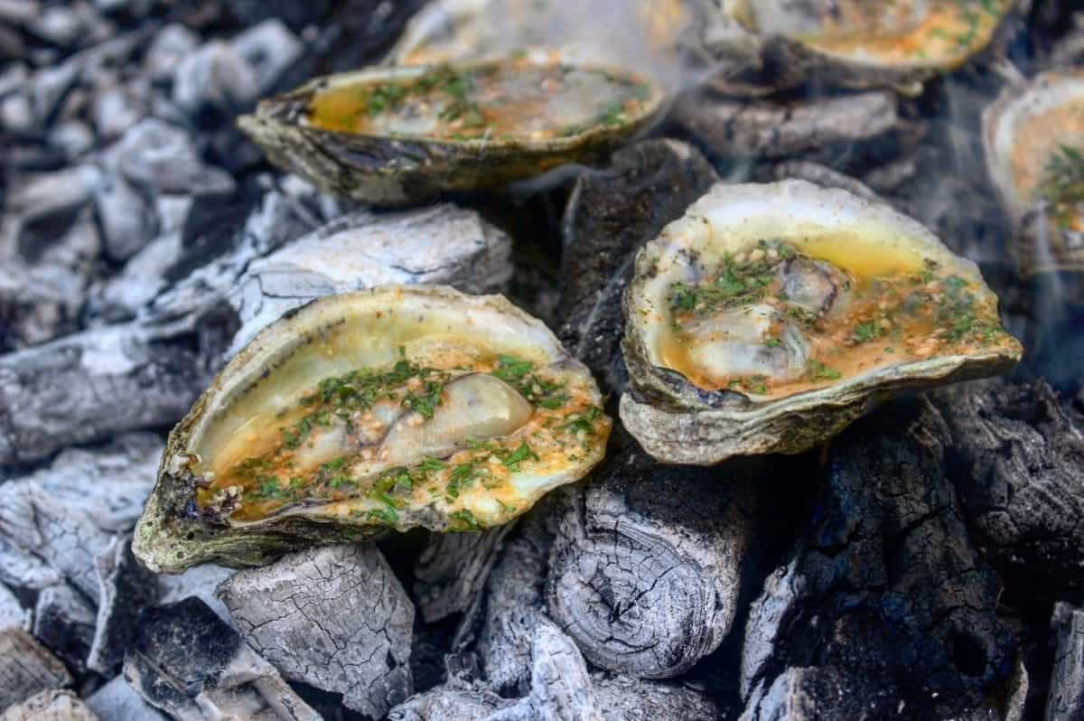 coal roasted oysters